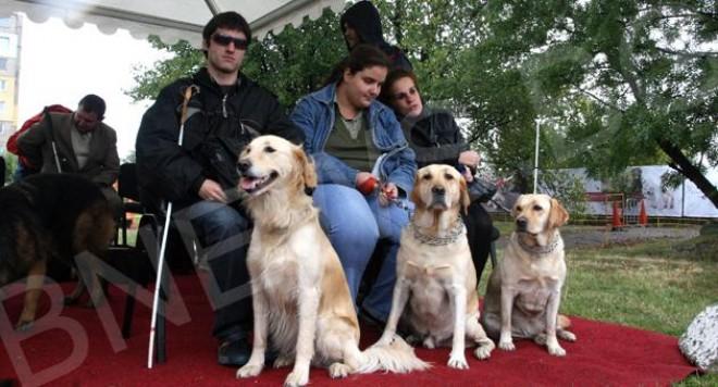 Кучета-водачи празнуват с М-Тел