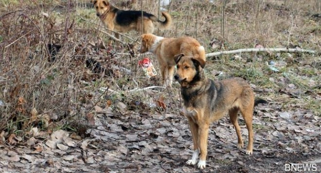 Бездомните кучета продължават да ни тероризират
