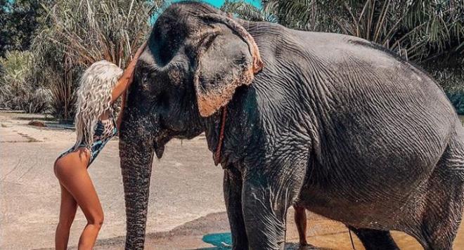 Андреа гушка слон в Тайланд